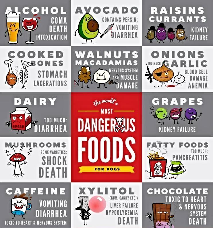 Which Foods Are Dangerous For Dogs Earthwise Liberty